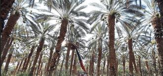 Greening the desert